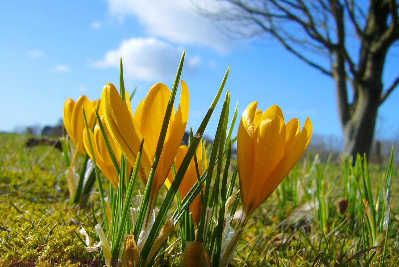 Tirolerhof Frühlingserwachen