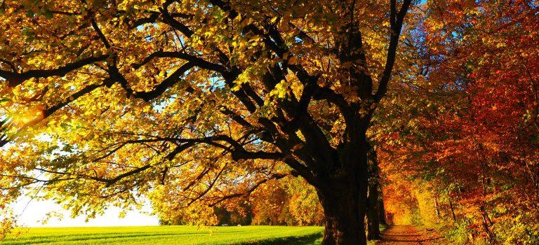 Goldene Herbstwanderwochen