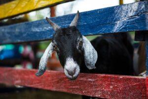 Wochenprogramm Bauernhof